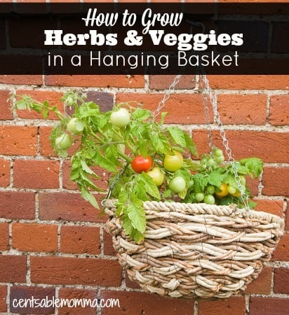 How to Grow Herbs & Veggies in Hanging Baskets