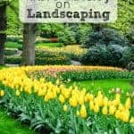 Want to add curb appeal to your yard? Find out some tips on how to save money on landscaping.
