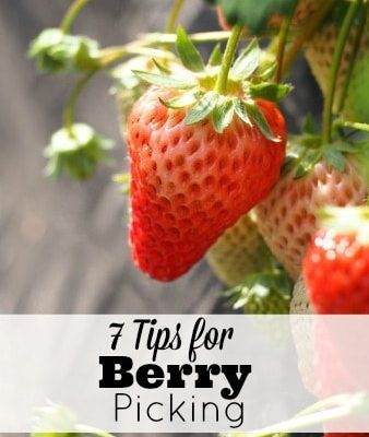 7 Tips for Berry Picking