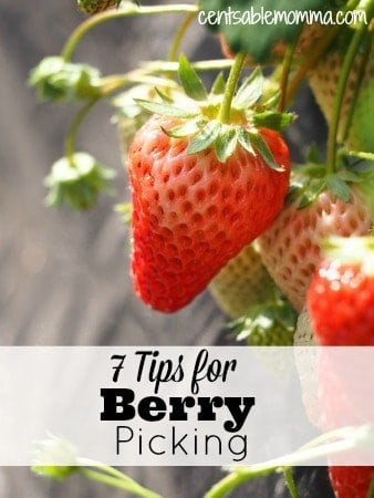 If you plan to pick some berries this summer, check out these 7 Tips for Berry Picking to make the most of your experience.