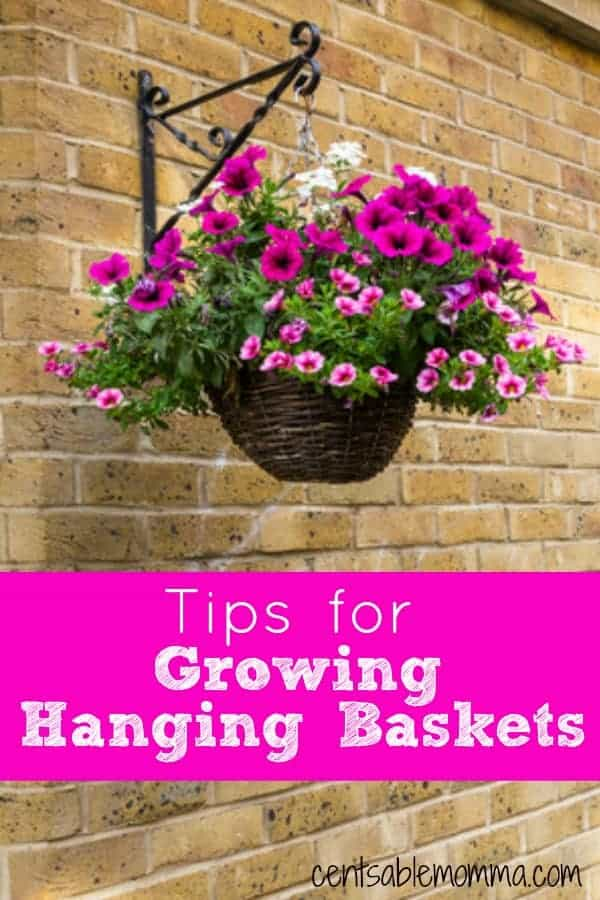 Check out these tips for growing hanging baskets to help you create your own perfect DIY outdoor hanging basket complete with your favorite flowers and plants.