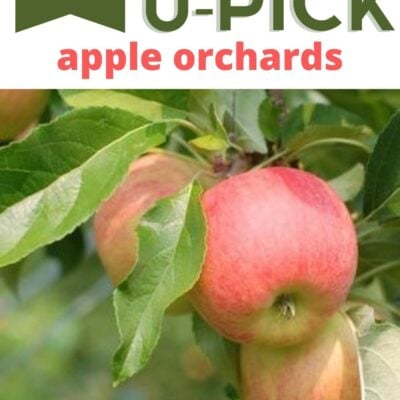 10 Tips for U-Pick Apple Orchards