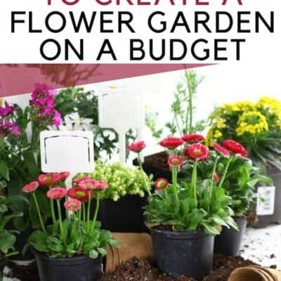 How to Create a Flower Garden on a Budget