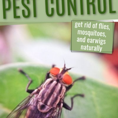 Natural Summer Pest Control