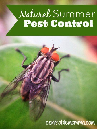Help keep the bugs away this summer with these Natural Summer Pest Control ideas. Perfect for avoiding nasty chemicals to get rid of the insects!