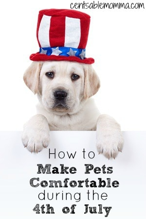 How to Make Pets Comfortable During the 4th of July