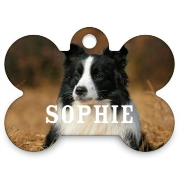 Shutterfly: FREE Pet Tag {today only}
