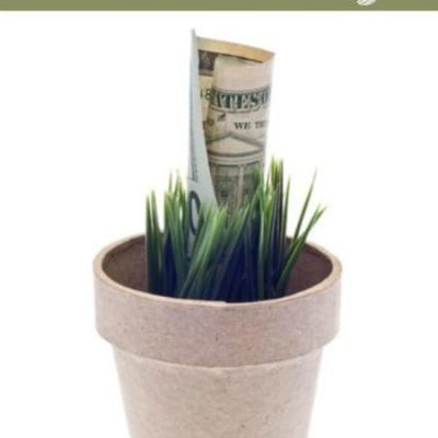 How to Start Gardening and Slash Your Budget