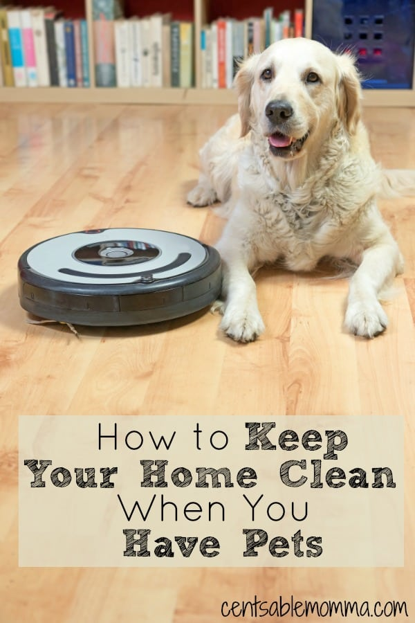 How to Keep Your Home Clean When You Have Pets