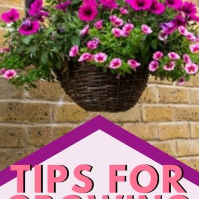 Tips for Growing Hanging Baskets