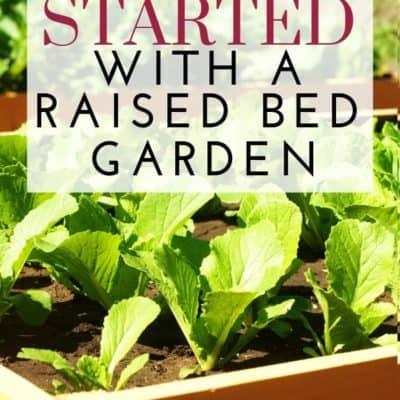 6 Steps to Get Started with a Raised Bed Garden
