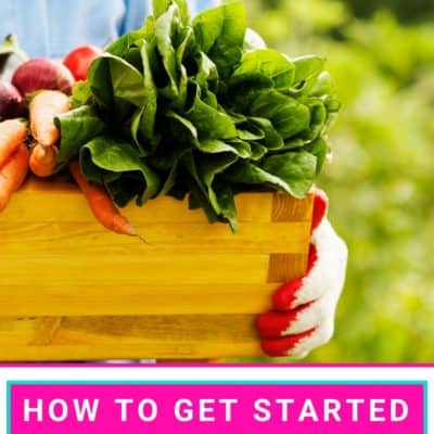 How to Get Started Gardening on a Budget