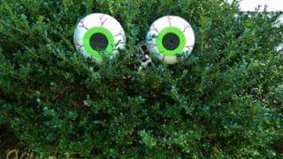 Dollar Store Spooky Bush Eyes